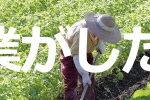 農業がしたい